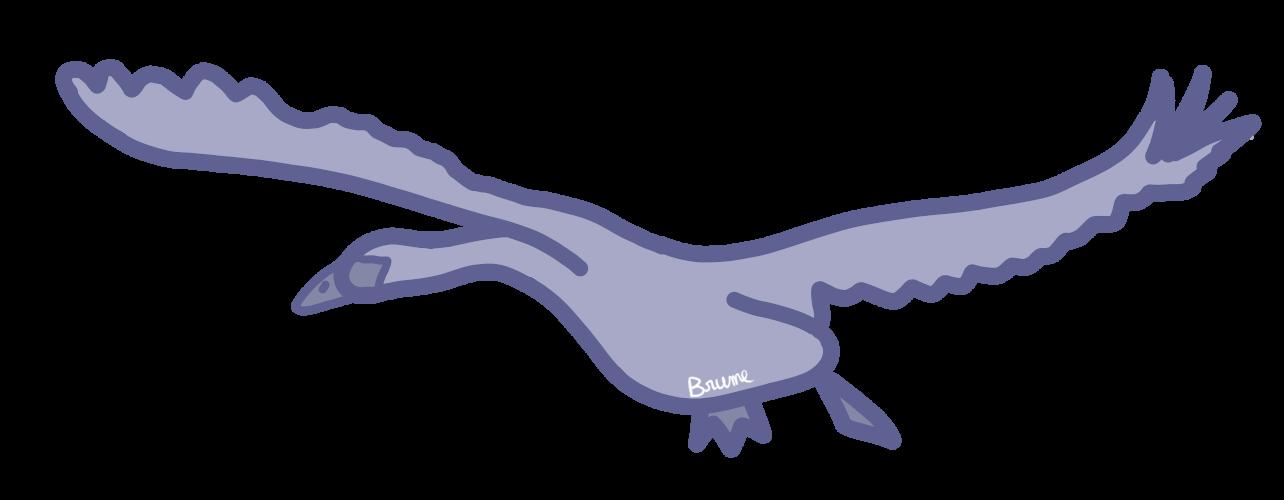 Un cygne